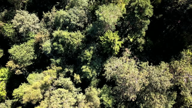 Aerial drone shot over the north european forest - fly over green trees. video