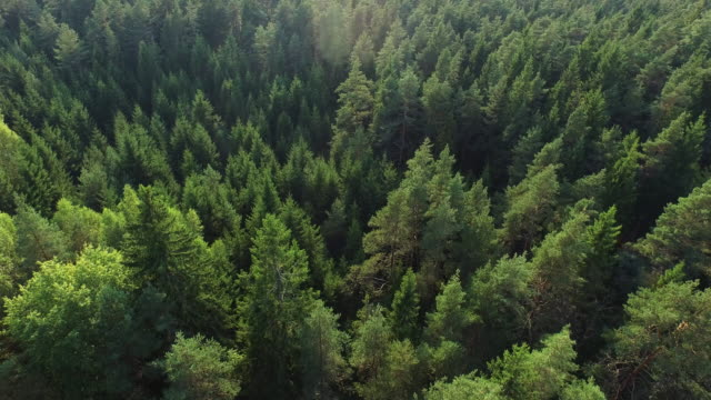 Aerial drone disparó sobre el bosque europeo del norte. - vídeo