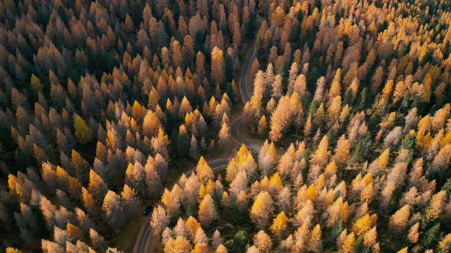 Aerial drone shot, tilt up, over autumn colored Forest, in italian Dolomites video