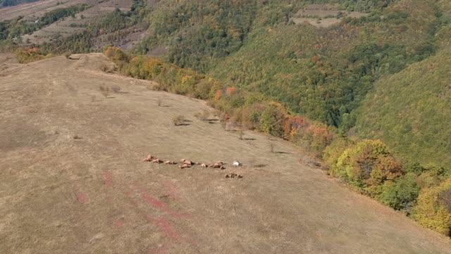 sırbistan'da stara planina dağının havadan drone videosu - sırbistan stok videoları ve detay görüntü çekimi