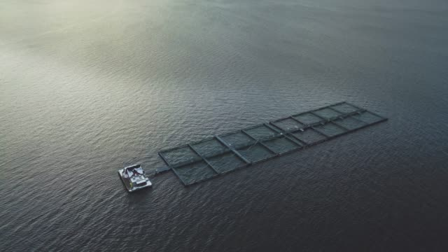 Luftfahrzeugview: Fischzucht in Norwegen – Video