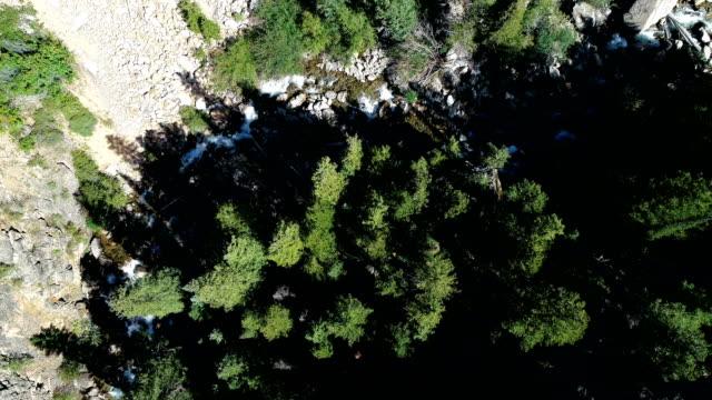 vídeos de stock, filmes e b-roll de vista aérea do zangão olhando direto para baixo e acima de floresta de pinheiros de colorado e do enrolamento - independence pass