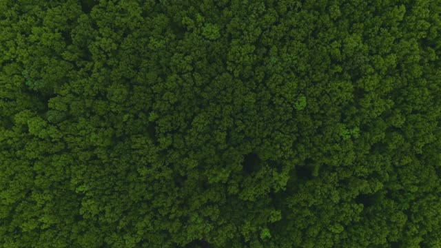 vidéos et rushes de vue aérienne de drone de grande forêt dense verte, ressemblant à le désert vert. - haut
