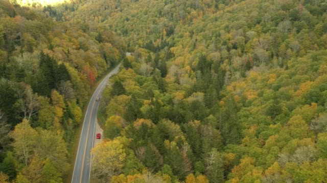 Aerial Drone view of Car driving in Fall / Autumn leaf foliage on a High Mountain road.  Vibrant yellow, orange, and red colors in Asheville, NC in the Blue ridge Mountains. Aerial Drone view of Car driving in Fall / Autumn leaf foliage on a High Mountain road.  Vibrant yellow, orange, and red colors in Asheville, NC in the Blue ridge Mountains. southeast stock videos & royalty-free footage