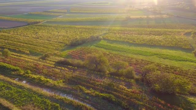 vídeos de stock e filmes b-roll de aerial drone view of colorful vineyards fields - uva shiraz