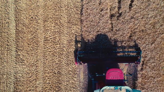 空中ドローン観を組み合わせて大きな黄金の麦畑での作業 - 木目のビデオ点の映像素材/bロール