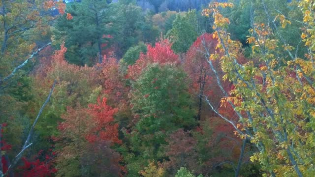 vídeos de stock e filmes b-roll de aerial drone view of fall / autumn leaf foliage on highway 215 from above. vibrant yellow, orange, and red colors in asheville, nc in the blue ridge mountains. - setembro