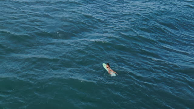 Vista aérea drone de surfista femenina en traje de baño de remar en el agua de mar - vídeo