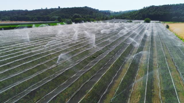 vidéos et rushes de vue aérienne de drone des champs des serres un jour ensoleillé avec le ciel bleu clair. sprinklers de travail éclaboussures gouttes d'eau sur le terrain. système d'irrigation automatisé. vue du haut sur la campagne. - arroser