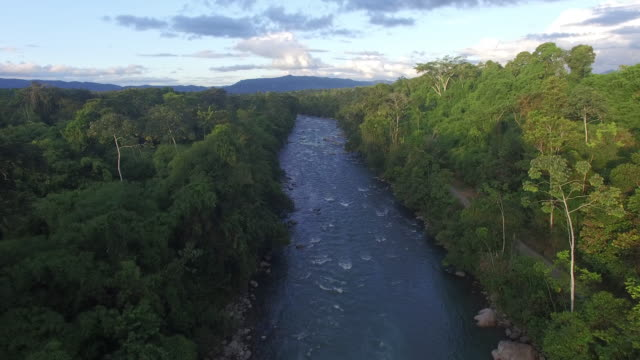 Aerial drone view of river in rainforest at sunset  amazon stock videos & royalty-free footage