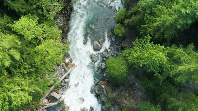 aerial drone view of river rapids in pacific northwest usa forest - origini video stock e b–roll