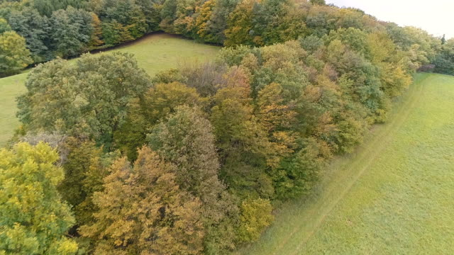 Aerial drone view of stunning colorful autumn fall forest video