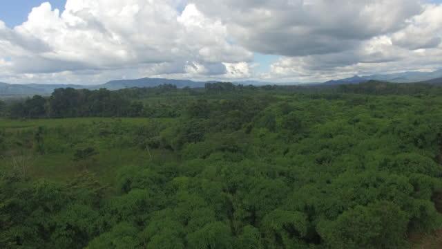 vídeos de stock e filmes b-roll de aerial drone view over rainforest - américa do sul