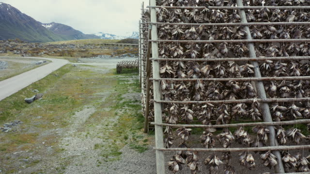 vídeos de stock e filmes b-roll de aerial drone view: stockfish industry at lofoten, in norway - cod
