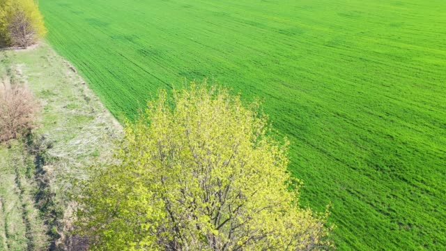 Aerial Europe Valley Farming crops agricultural video