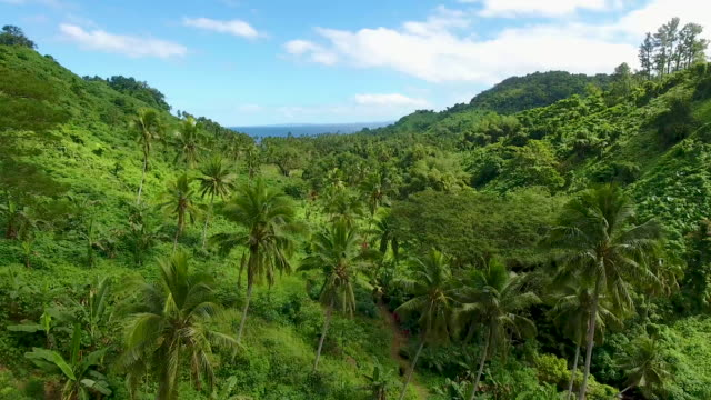 aerial - fiji jungle waterfall hike - exotic stock videos & royalty-free footage