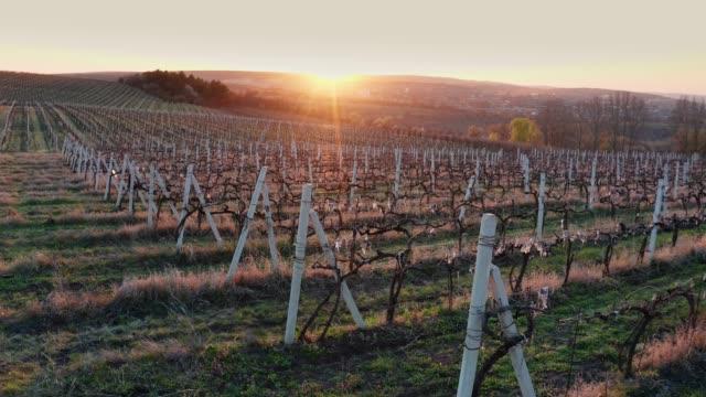 aerial flight beside vineyard rows at early springtime at sunset - молдавия стоковые видео и кадры b-roll