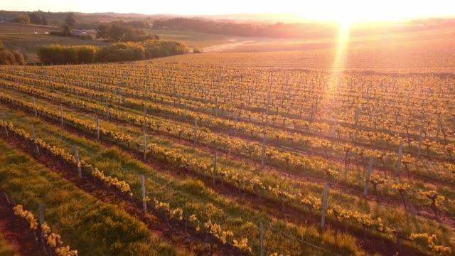 vídeos y material grabado en eventos de stock de vuelo aéreo sobre paisaje hermoso viñedo en francia al caer el sol. 4k uhd. - francia