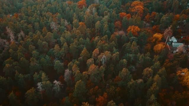 vídeos de stock, filmes e b-roll de vôo aéreo sobre a floresta da queda. laranjeiras, vermelhos, amarelos e verdes coloridos árvores de outono - setembro amarelo