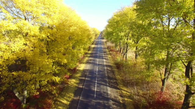 Aerial Flight over the road between fields. Autumn colors. video