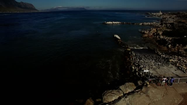 vídeos de stock, filmes e b-roll de voo aéreo - pessoas assistindo pinguins no oceano - penedo