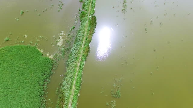vídeos de stock e filmes b-roll de 4k .aerial. fly over  dirt road among dirty water and green cane - ambiente vegetal