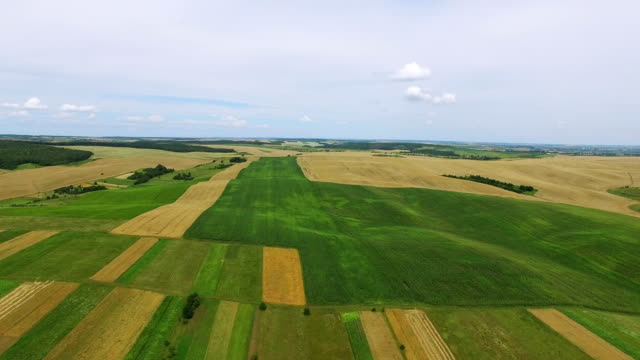 vídeos de stock e filmes b-roll de 4k .aerial. fly over  green and yellow agricultural  fields. - ambiente vegetal