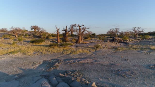 Aerial fly over view of baobabs on Kubu island Aerial fly over view of baobabs on Kubu island, Makgadikgadi Pans ,Botswana makgadikgadi pans national park stock videos & royalty-free footage