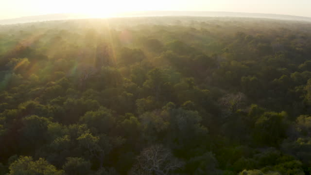 Aerial fly over view of the sun's rays streaming over the tree tops with large baobab trees in a tropical rain forest, Central Africa