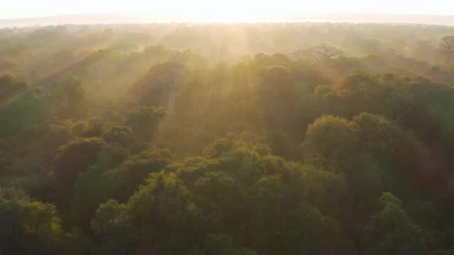 vidéos et rushes de vol aérien au-dessus de vue des rayons du soleil coulant au-dessus des cimes d'arbre avec de grands baobabs dans une forêt tropicale de pluie, afrique centrale - étendue sauvage scène non urbaine