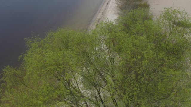 Aerial: Flying over Willow tree with young leaves in spring against the background of the landscape with the river and the bridge.  Evening, twilight.