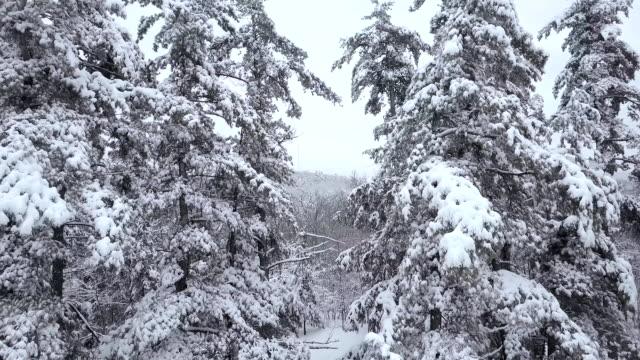 antenne durch lücke im verschneiten bäumen fliegen - kiefernwäldchen stock-videos und b-roll-filmmaterial