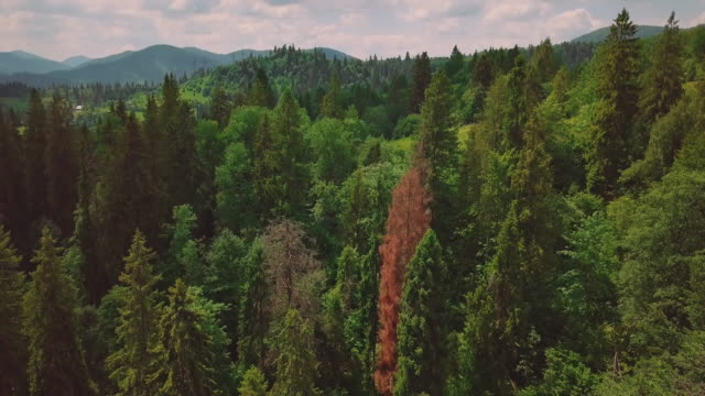Aerial flythrough of beautiful mountains and forest. bird's eye view video
