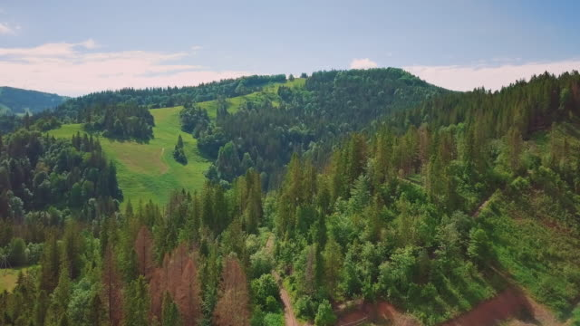 Aerial flythrough of beautiful mountains and forest. In the frame, the sky and coniferous forest, a bird's eye view video
