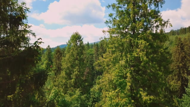 Aerial flythrough of beautiful mountains and forest. View of the pines and the sky video