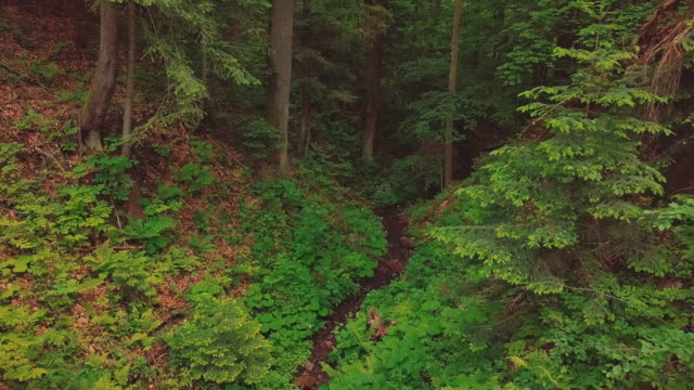Aerial flythrough of beautiful mountains, canyon and small river. The camera flies into the thick of the forest video
