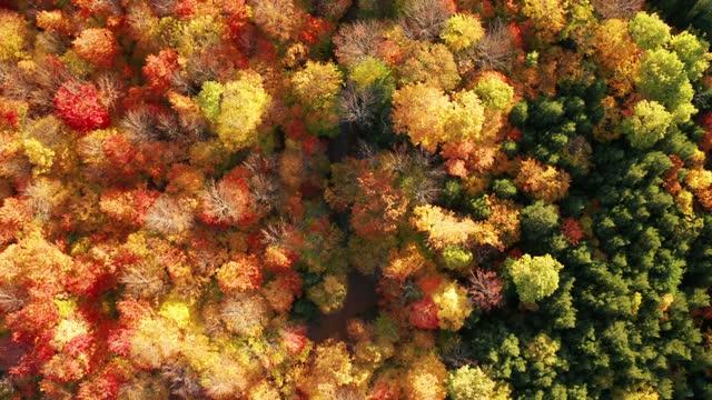 new england sonbahar renkleri ile sonbaharda dağ ormanları havadan flythrough - ultra yüksek çözünürlüklü televizon stok videoları ve detay görüntü çekimi