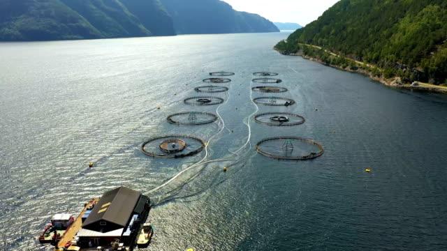 luftaufnahmen farmlachsfischerei in norwegen - fische und meeresfrüchte stock-videos und b-roll-filmmaterial