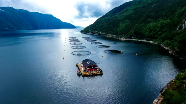 vídeos de stock e filmes b-roll de aerial footage farm salmon fishing in norway - aquacultura