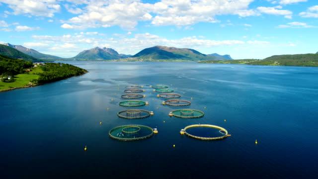 Aerial footage Farm salmon fishing in Norway video
