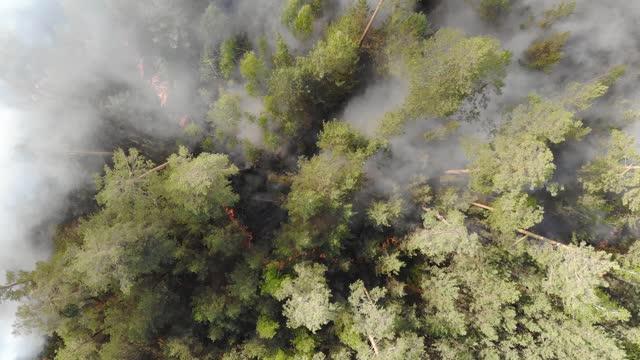 空中映像の火災と煙、シベリア、ロシア。シベリアの森の野生の火災。 - シベリア点の映像素材/bロール