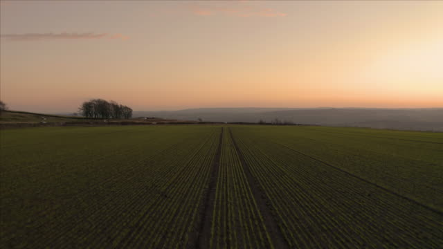 Aerial footage flying low over rows of planted seeded farmland fields with a reveal of hills in the Peak District National Park during a beautiful orange sunset