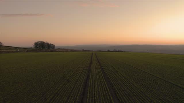 riprese aeree che volano basse su file di campi agricoli seminati piantati con una rivelazione di colline nel peak district national park durante un bellissimo tramonto arancione - prateria campo video stock e b–roll