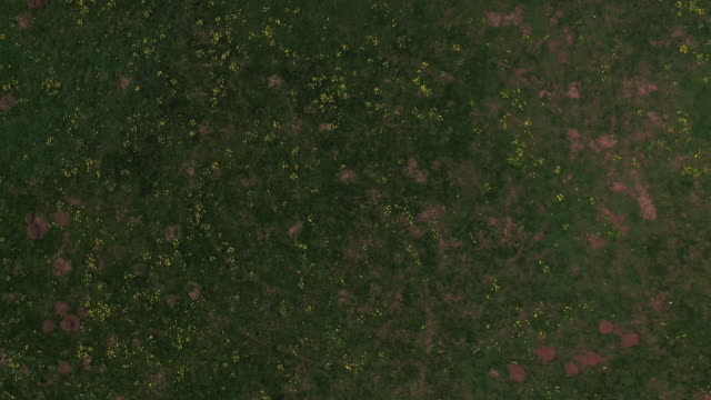 Aerial footage of beautiful meadow on a summer day
