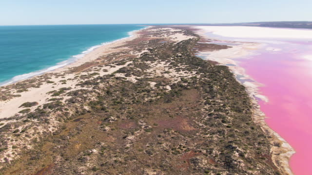 aerial: footage of bright pink saltwater lake. hutt lagoon pink lake. western australia. - western australia stock videos & royalty-free footage
