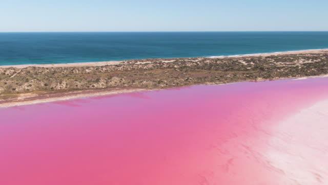 vidéos et rushes de aerial: images d'un lac d'eau salée rose vif. lagune hutt pink lake. australie-occidentale. - lac salé