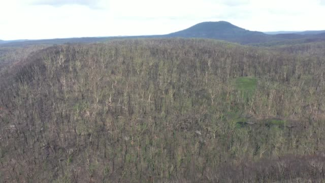 Aerial footage of forest regeneration after the severe bushfires in Australia video