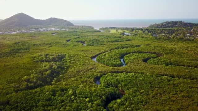 Aerial footage of mangroves and Halfmoon Creek at Yorkeys Knob, near Cairns, Queensland, Australia. August 2018. Yorkeys Knob is a coastal suburb with predominantly low-lying land (less than 10 metres above sea level) with the exception of the hill (known as Yorkeys Knob) rising to 60 metres on the coast at Yorkeys Point. The northern part of the suburb near the coast is residential, but the majority of the land use is rural, mainly used for growing sugarcane and some covered by mangroves. swamp stock videos & royalty-free footage