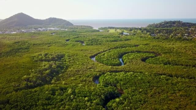 aerial footage of mangroves and halfmoon creek at yorkeys knob, near cairns, queensland, australia. august 2018. - болото стоковые видео и кадры b-roll
