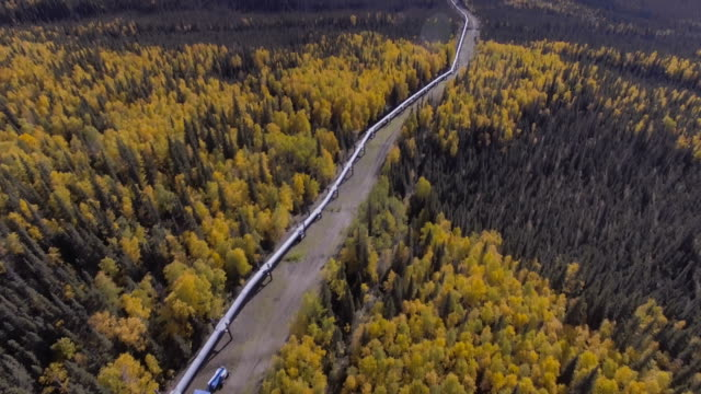aerial footage of the alaska oil pipeline in the fall season, dalton highway - трубопровод стоковые видео и кадры b-roll